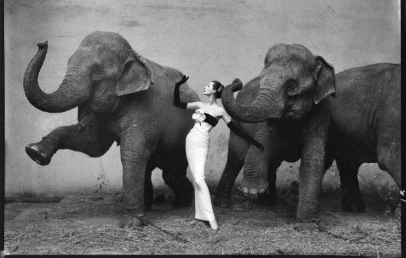 Dovima with Elephants, Evening Dress by Dior, Cirque d'Hiver, Paris. Photo by Richard Avedon.