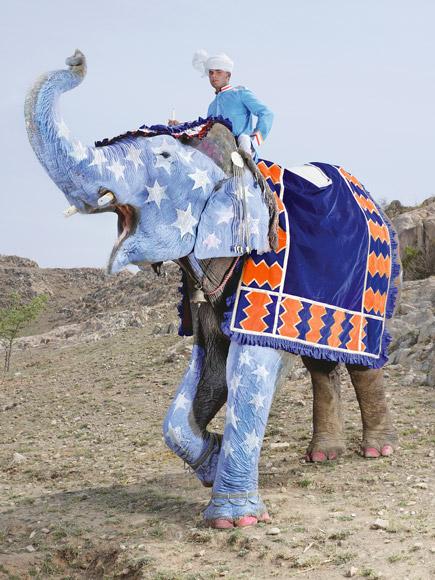 charles freger painted elephant 2