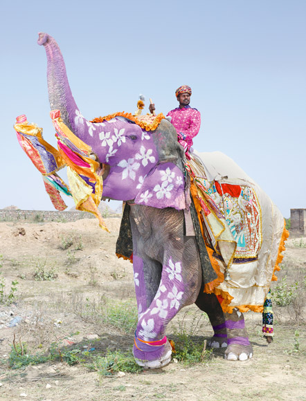 charles freger painted elephant