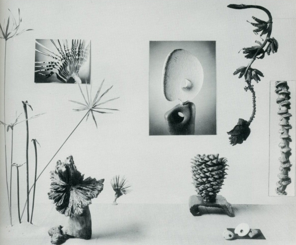 New Horizons in Flower Arrangement by Myra J. Brooks with Mary Alice and John P. Roche, M. Barrows & Co., NY, 1961