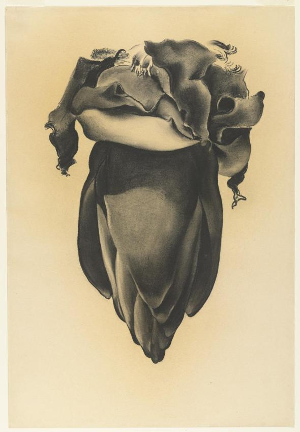 georgia-okeeffe-banana-flower-1934
